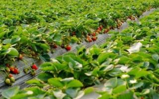 农业用地新政策成农村发展新亮点