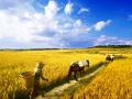 随着人们生活质量的提升及对健康的追求,关于减农药减化肥,你怎么看?