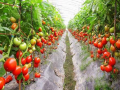 农业大事件!有机肥代替化肥,其中有着巨大的潜力,你知道吗?