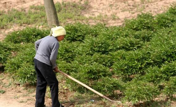 自己开垦荒地可以确权吗?种植作物能拿补贴吗?